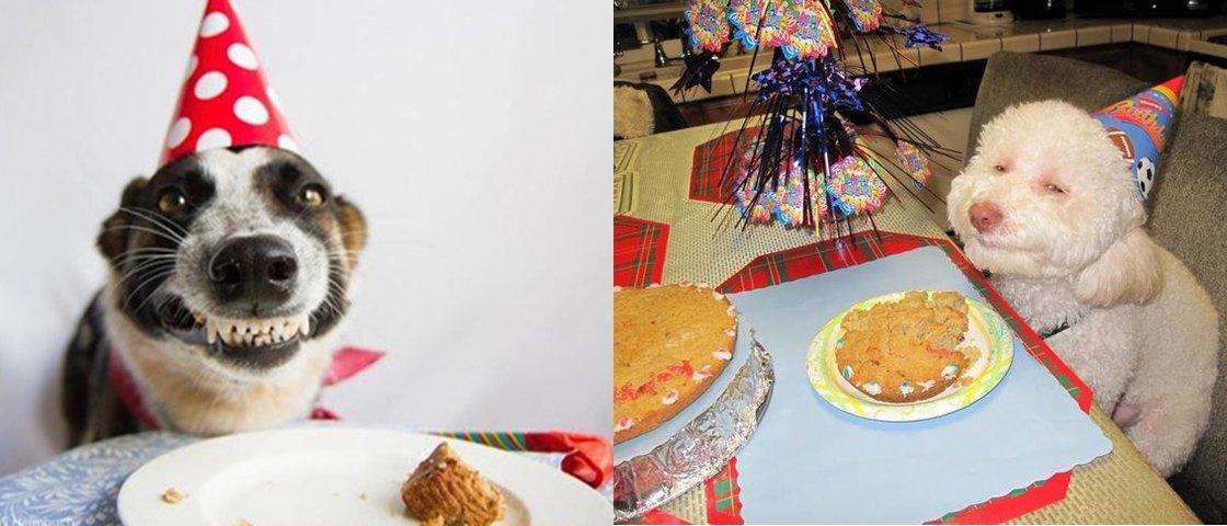 10 vezes em que animais tiveram uma festa de aniversário melhor que a sua