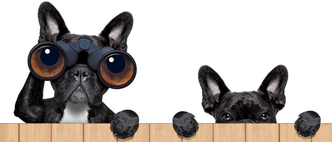 Conheça 5 animais que foram acusados de espionagem