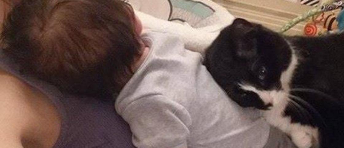 Muito amor: gata-babá cuida de neném desde antes de ele nascer