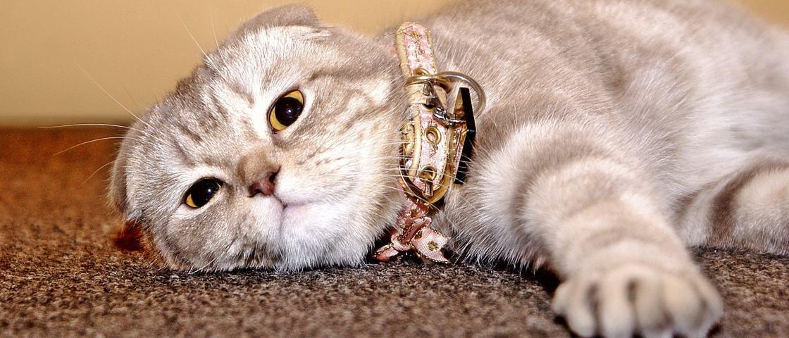 8 formas adoráveis de os gatos dizerem que te amam