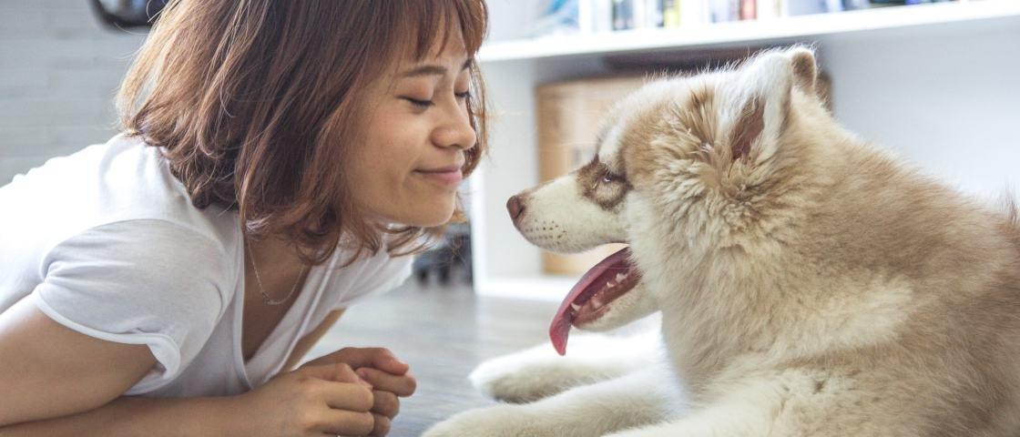 9 formas de os cachorros demonstrarem todo o amor a seu dono