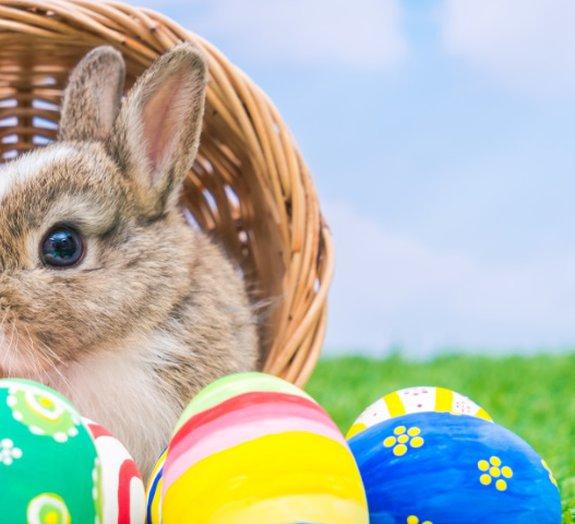Afinal, o que o coelhinho tem a ver com a Páscoa?