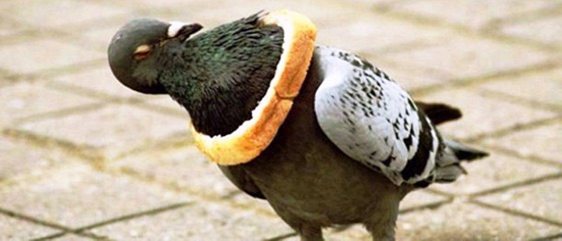 11 animais que se enfiaram nos lugares mais inusitados