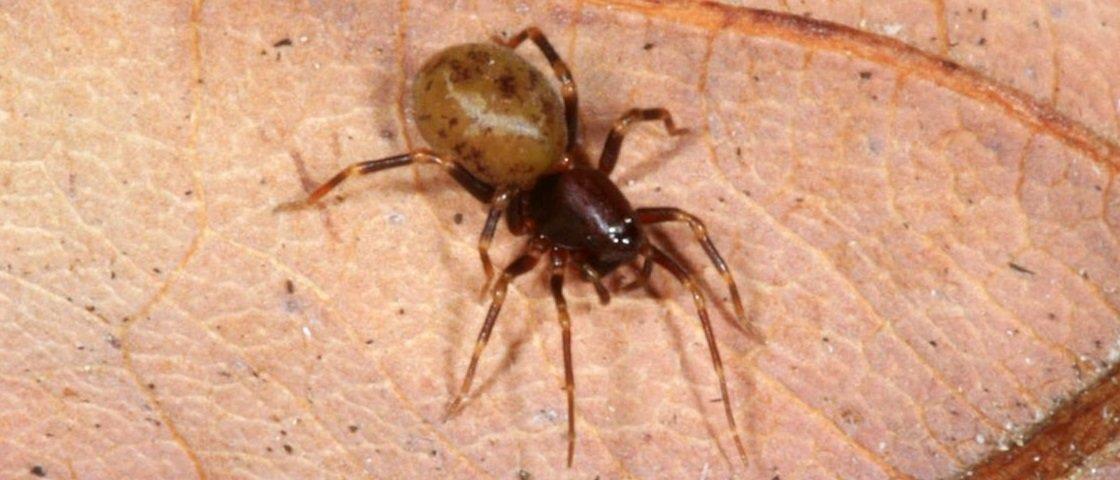 Veja a impressionante velocidade de ataque de uma aranha [vídeo]