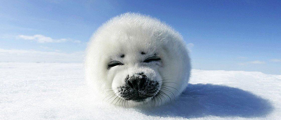 Estes 16 animais vão fazer você sorrir instantaneamente
