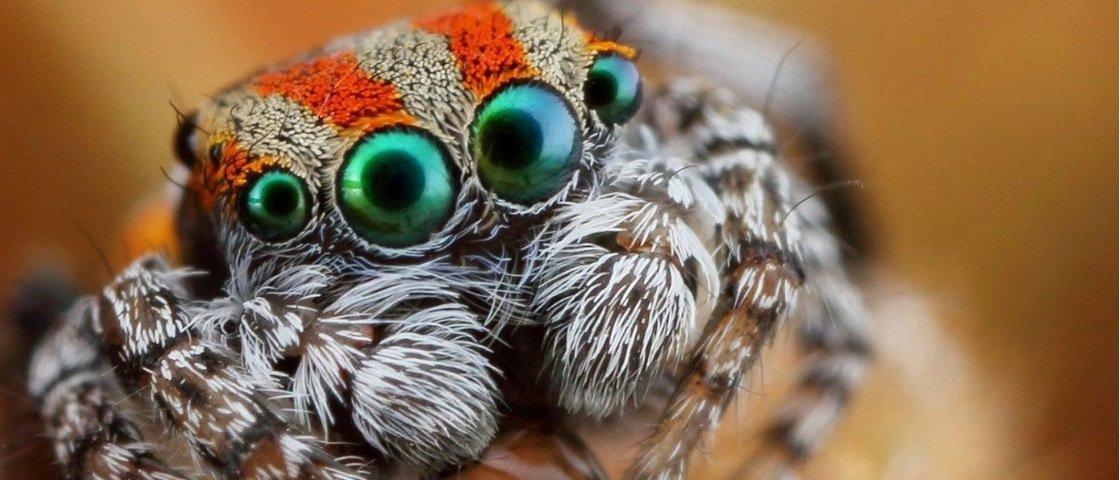 Confira 21 curiosidades fascinantes relacionadas com as aranhas