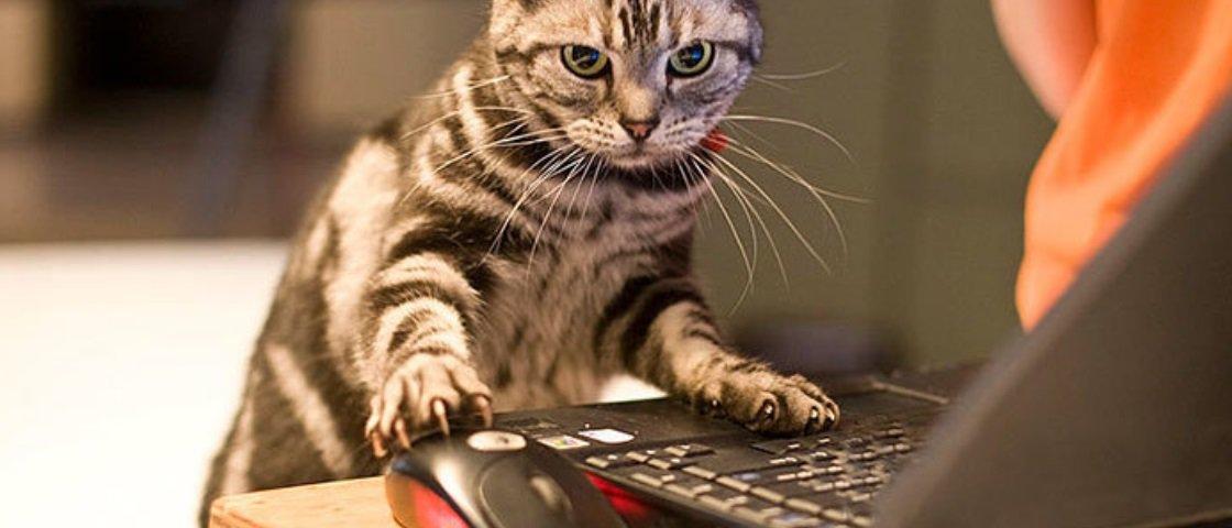 Estas 13 fotos provam que nem seus gatos fugiram das mudanças tecnológicas