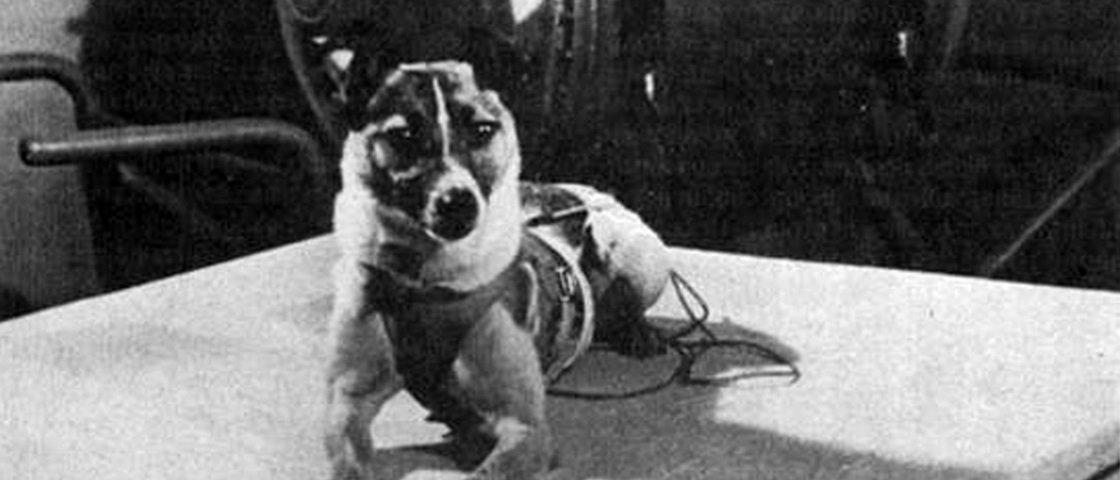 """Conheça a triste história de Laika, o primeiro animal """"cosmonauta"""" do mundo"""