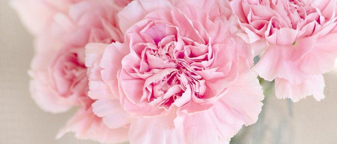 Cupom da semana: 30% de desconto em flores e arranjos na Giuliana Flores
