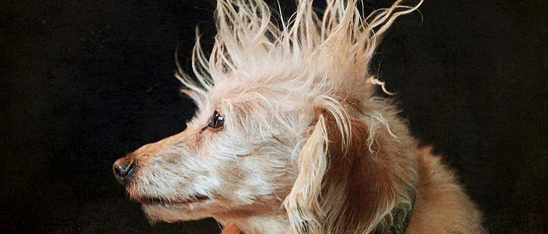 10 animais de estimação com penteados modernos até demais