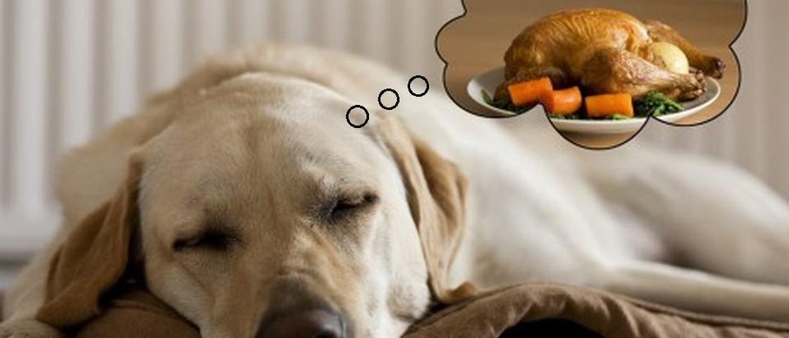 Você acredita que seu cachorro possa sonhar durante o sono?