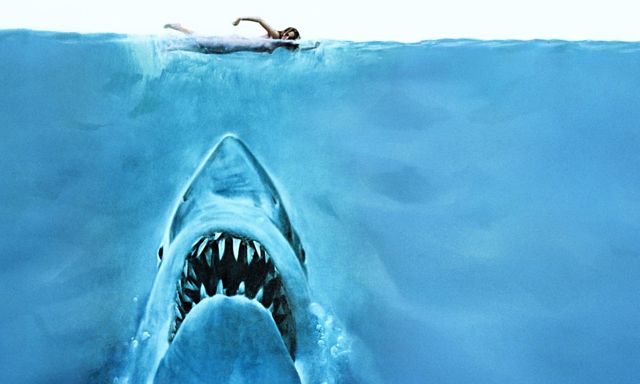 Terror dos mares: descubra 10 curiosidades iradas sobre tubarões-brancos