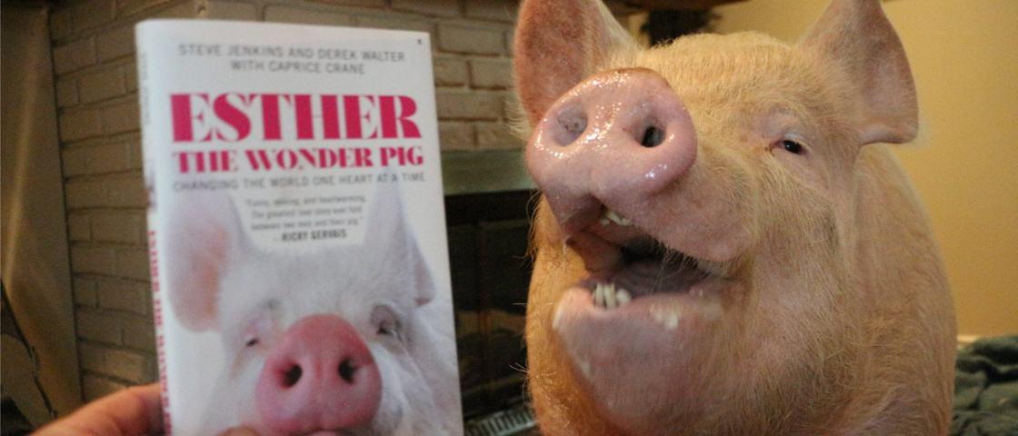 Conheça Esther, a porquinha de estimação que inspirou até um best-seller