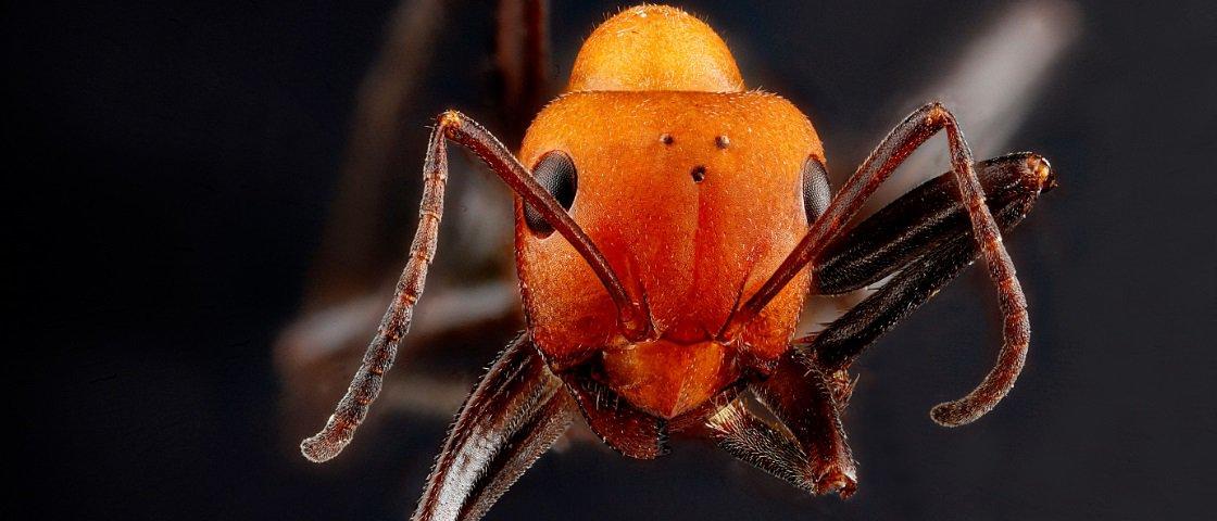 Sabe o que aconteceria se uma formiga caísse do alto de um arranha-céu?