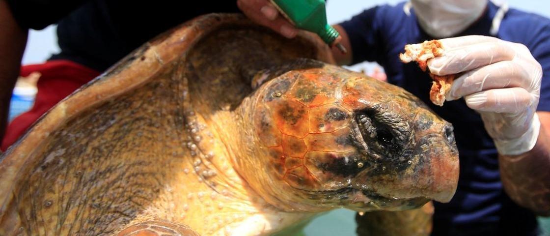 Tartaruga fica ferida ao ser pisoteada por banhistas que queriam selfies