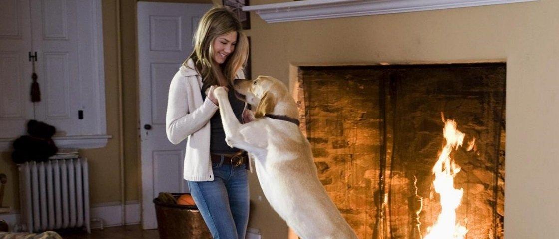 Entenda por que cachorros são ótimas fontes de conforto e de bem-estar