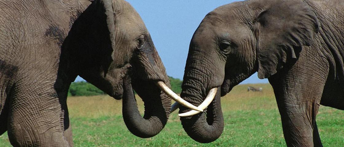 20 animais que apresentam comportamentos homossexuais