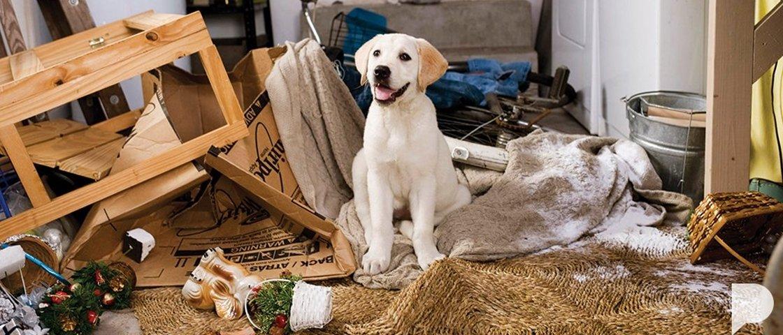 15 situações que todo dono de cachorro bagunceiro conhece muito bem