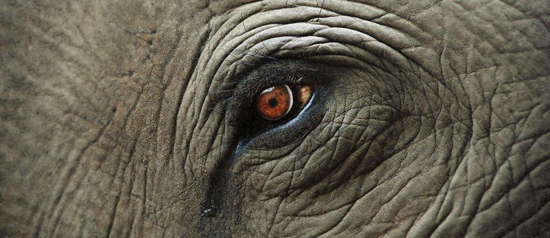 Os animais sentem a morte de seus entes queridos?