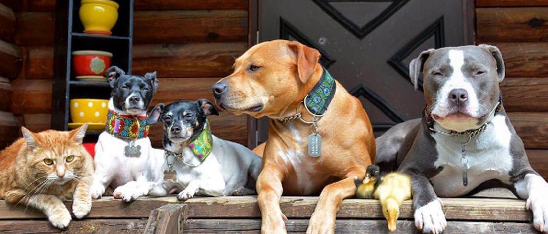 Família feliz: casal salva 4 cães, 2 patos e 1 gato e publica fotos lindas