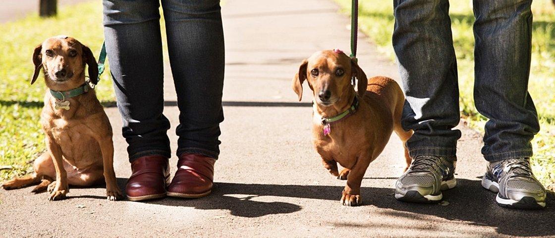 O primeiro dia destes 15 cães após a adoção vai derreter o seu coração