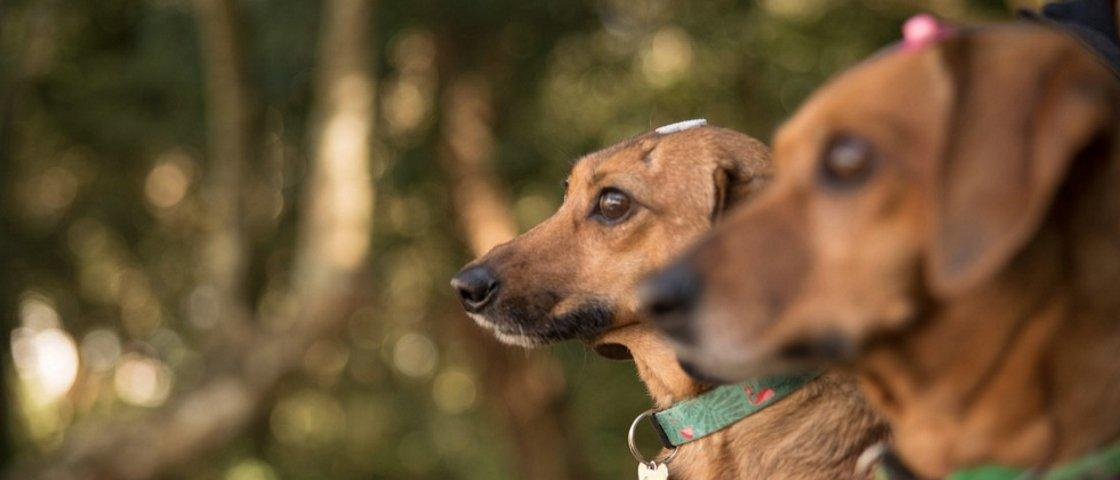 6 dicas para você se divertir com seu cão nos passeios