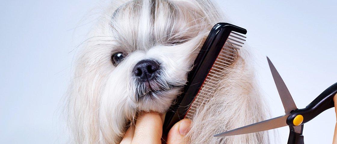Tem Na Web - O novo visual destes 8 cães é a coisa mais fofa que você vai ver hoje