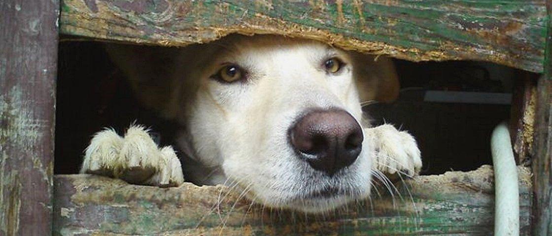 11 cães desesperados que só queriam dizer 'oi'