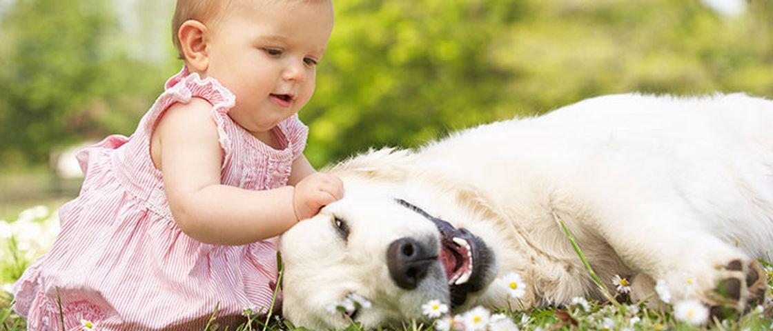 Cães têm inteligência igual à de bebês; veja este e outros 13 fatos caninos