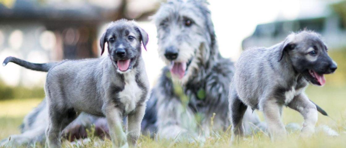 Veterinários identificam primeiro caso de cachorros gêmeos idênticos