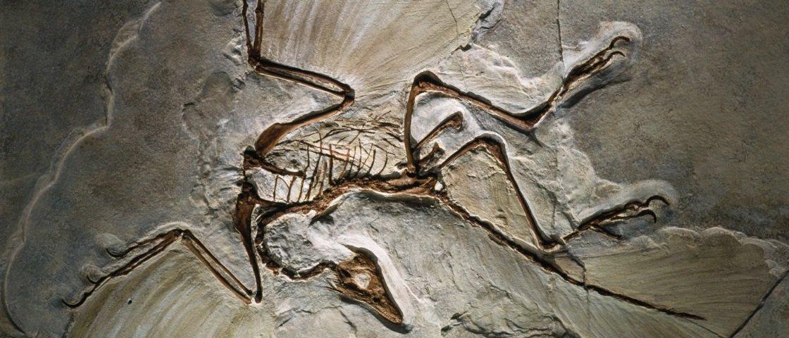Vestígios da evolução: 5 dos fósseis mais antigos e curiosos já descobertos