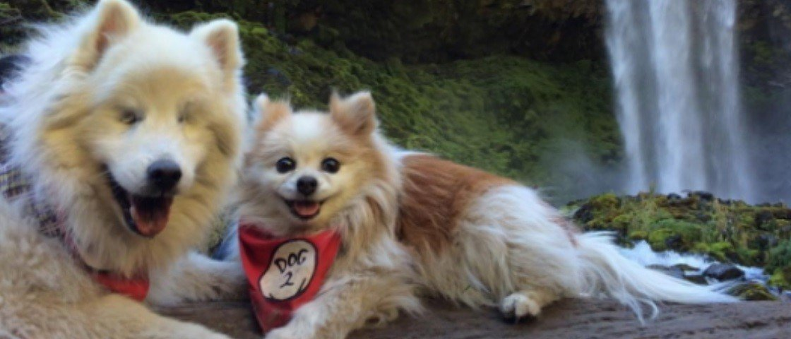 Fofura do dia: este cachorro cego agora tem seu próprio cão-guia