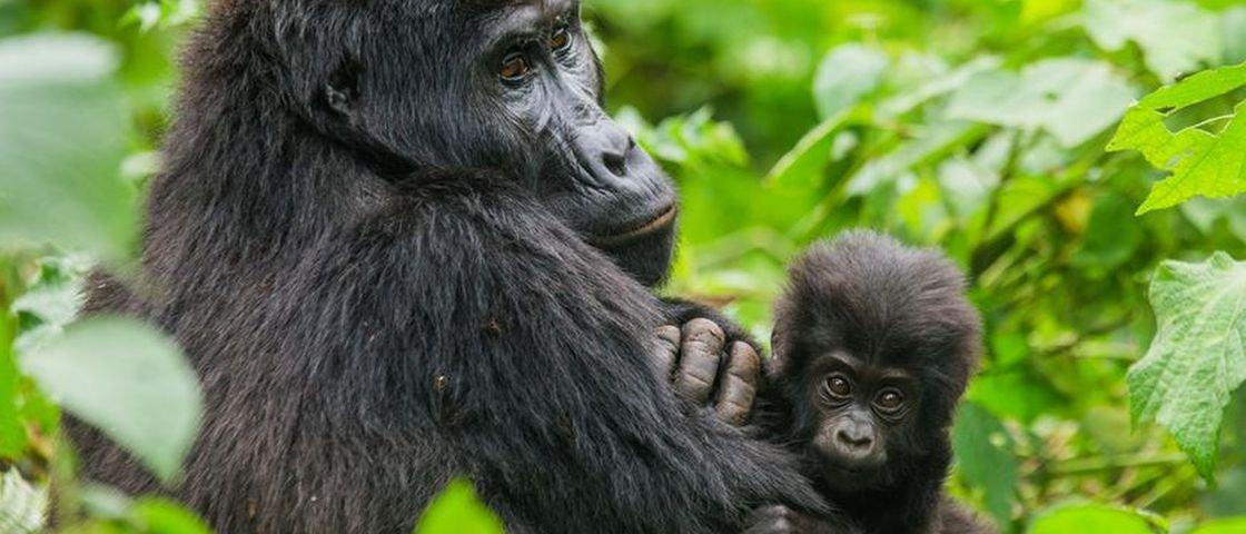 7 animais que todo mundo ama e que podem sumir da Terra