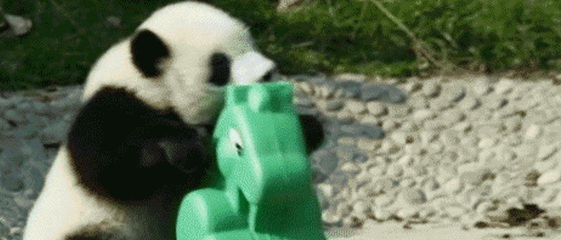 13 GIFs de pandas caindo, porque até nisso eles são fofinhos e divertidos