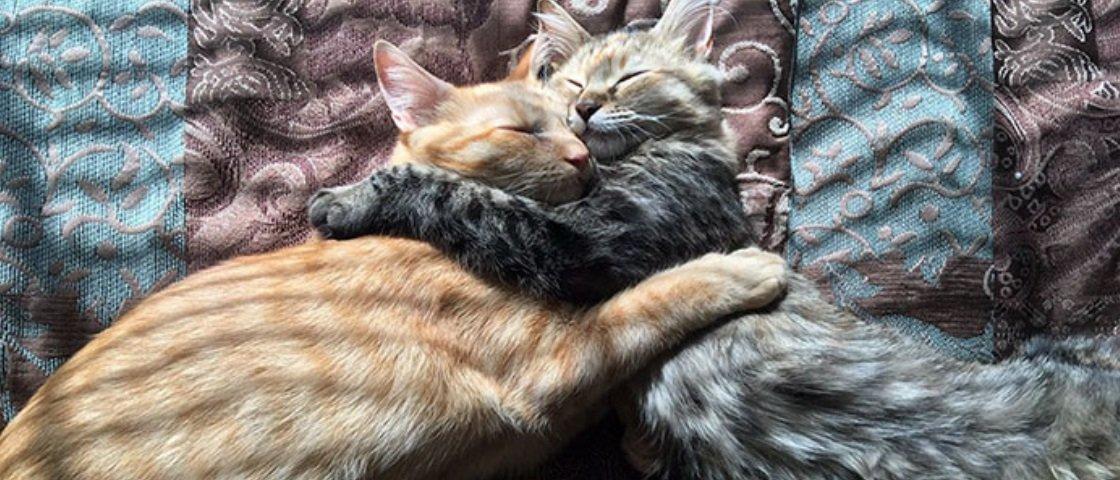A internet não está sabendo lidar com estes dois gatinhos apaixonados
