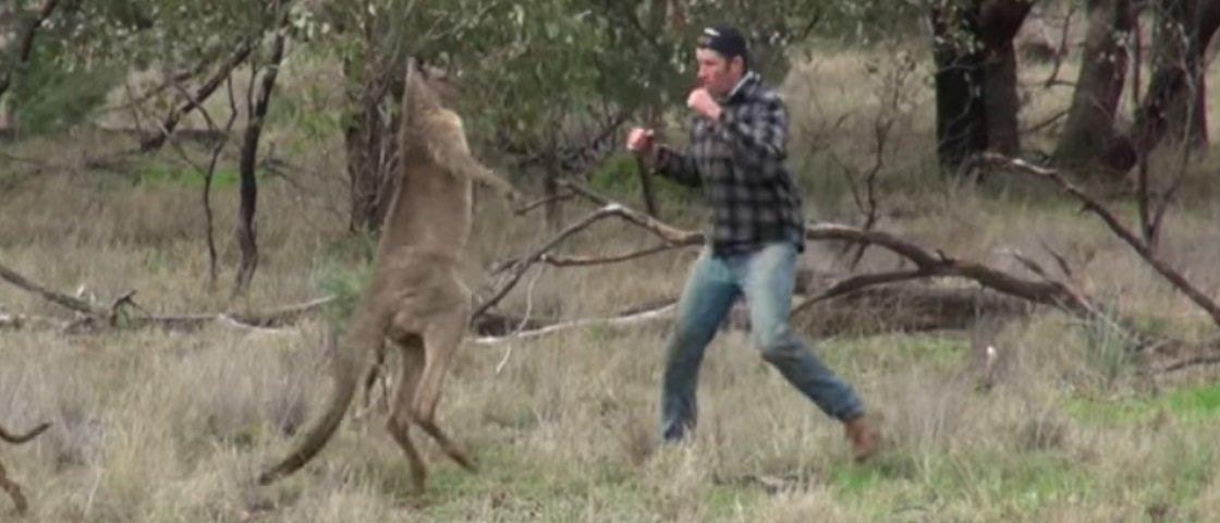 Homem e canguru se enfrentam na briga mais estranha que você vai ver hoje