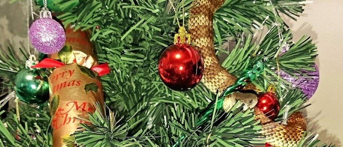 Adivinhe onde foi: mulher se depara com cobra letal em Árvore de Natal