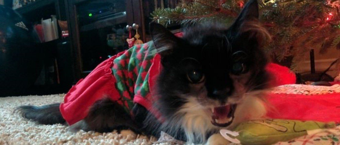 20 gatos que definitivamente não curtem o Natal