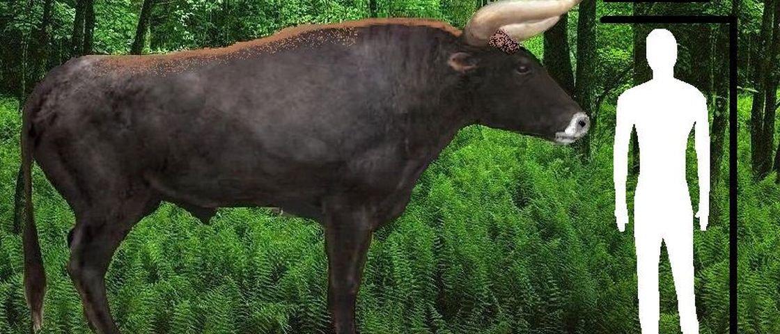 Vaca gigante e extinta está prestes a voltar à vida
