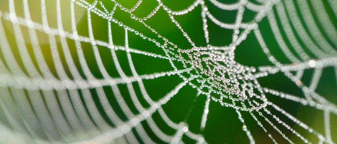 Cientistas recriam teia de aranha em laboratório