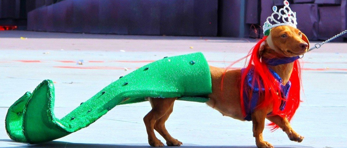 Carnaval pet: esses 10 cães fantasiados vão alegrar o seu dia