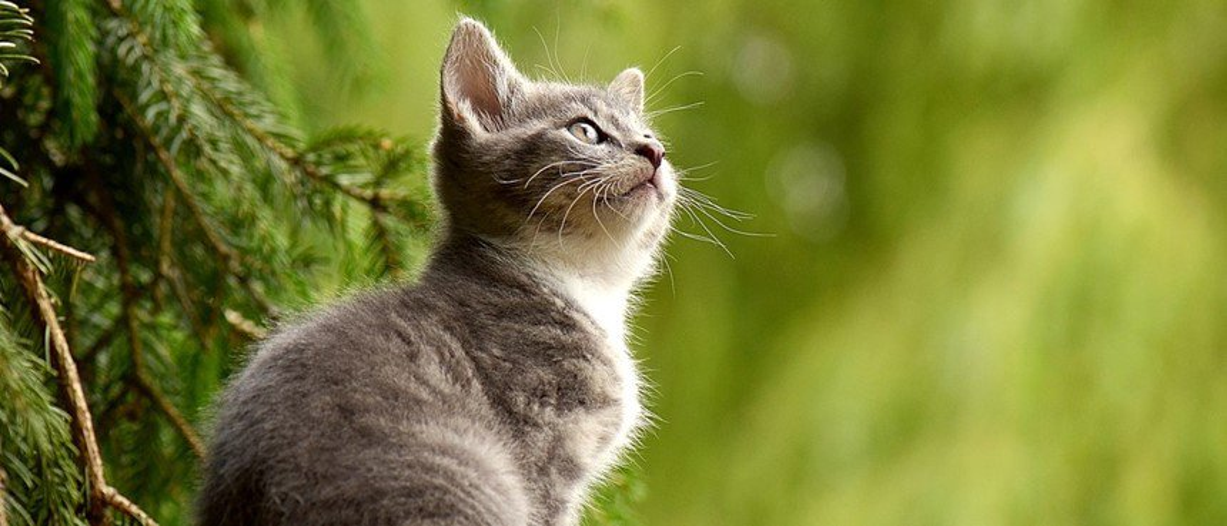 Ah, os gatos... 5 perguntas e respostas sobre comportamentos desses felinos