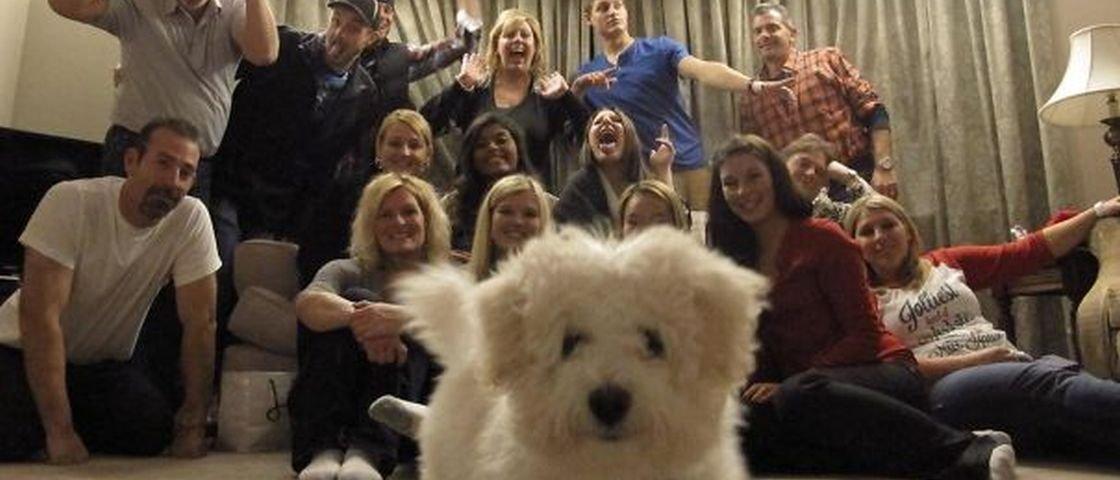 15 cachorros que são mestres na arte do photobombing