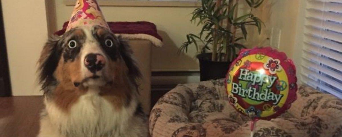 Estes 21 cachorros parecem ter medo de absolutamente tudo