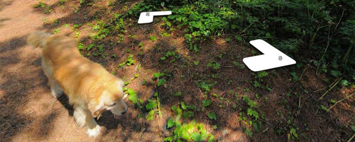 Cachorro segue fotógrafo do Street View e faz sucesso na internet