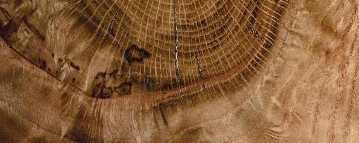 Inacreditável: estas cenas hipnotizantes mostram madeira sendo cortada