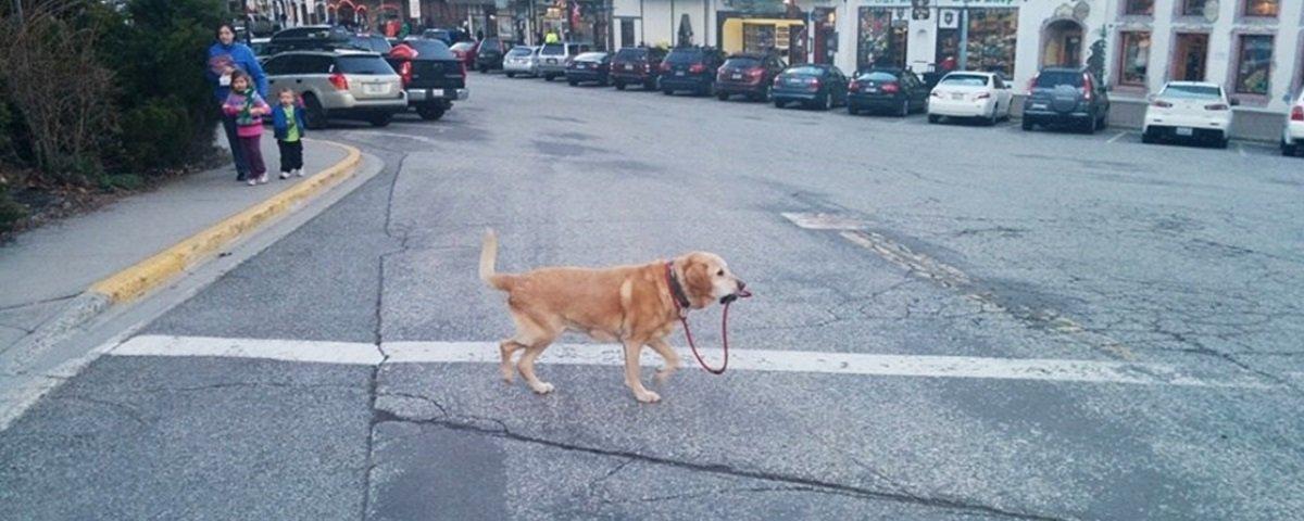 13 cães que foram flagrados em situações bem improváveis