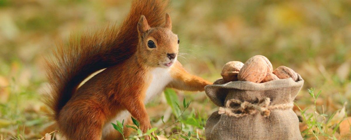 Esquilos: descubra 15 curiosidades sobre esses animais