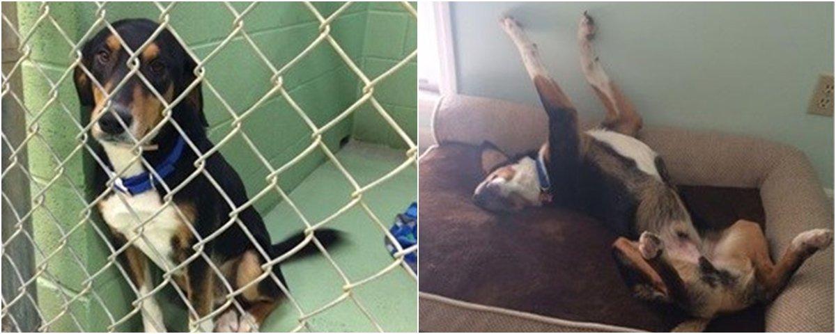 Veja o que aconteceu com estes 13 animais após serem adotados