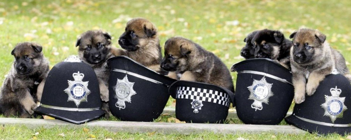 Estas 12 imagens revelam como são os cães policiais nas horas vagas